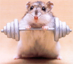 buff mouse lifting weights